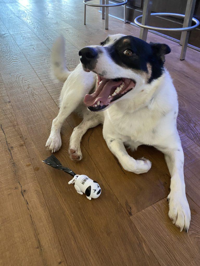 Dog-Shaped Pet Waste Bag Dispenser